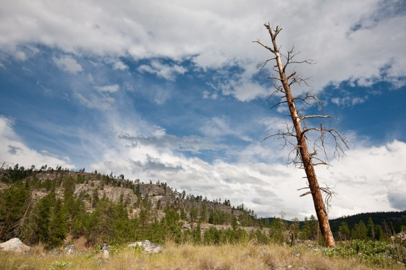 Dead pines are testament to the fires that ravage this area over the years