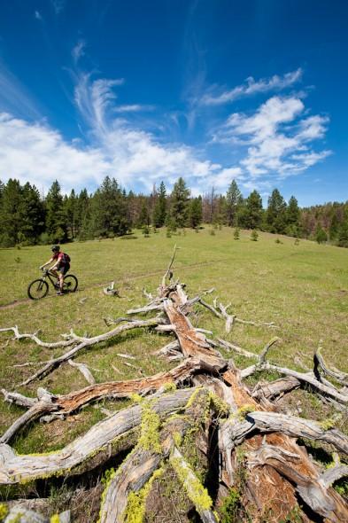 Alpine meadow, Cow Trail