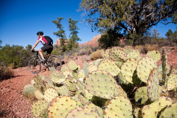 Riding among the prickly pear on the Llama trail. Sedona, AZ