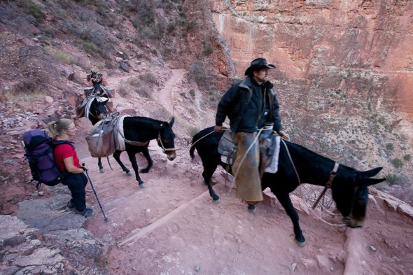 Getting passed by mule train back near the rim on day three. Mules are used to carry supplies in and out of Phantom Ranch (Bright Angel Canyon) as well as tourists who don't want to walk...