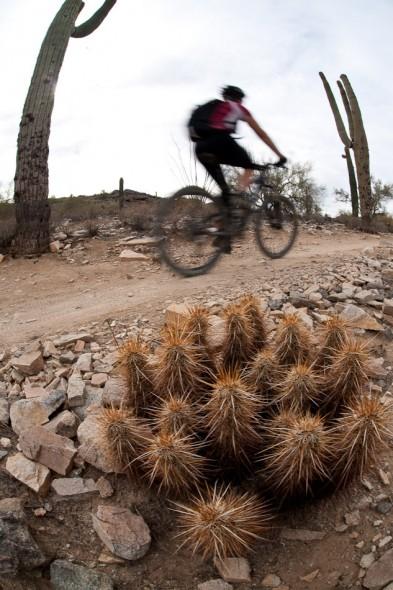 More cactus...