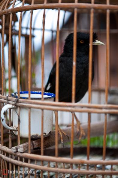 """""""song bird"""""""