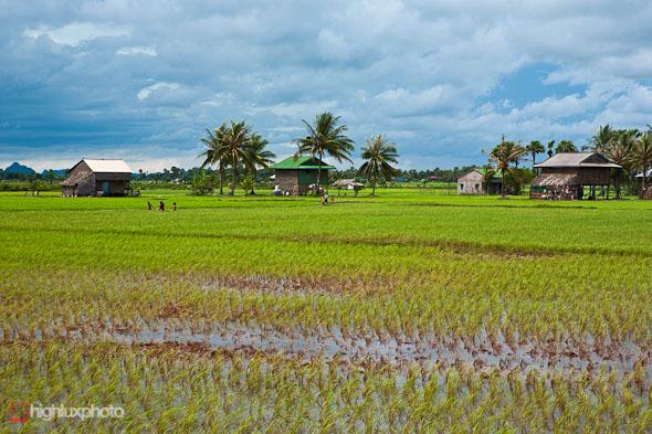 rice paddies cambodia