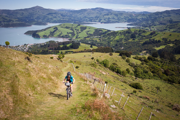 Morning of day two we climbed straight of Akaroa via Purple Peak Road, a brutally steep stock route that climbs to the crater rim just north of Stony Bay Peak.