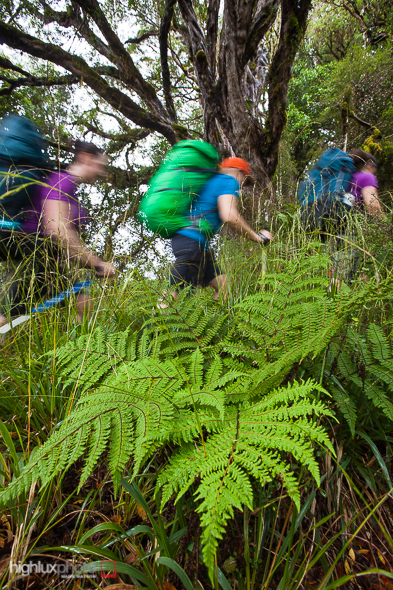 It's a steep climb through montane forest and southern rata onto pt 974m.
