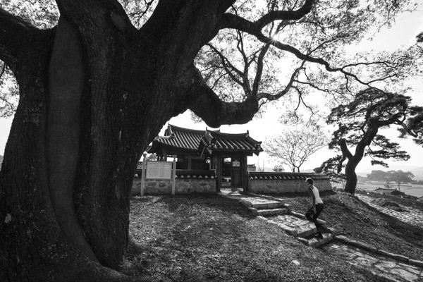Three Trees Temple