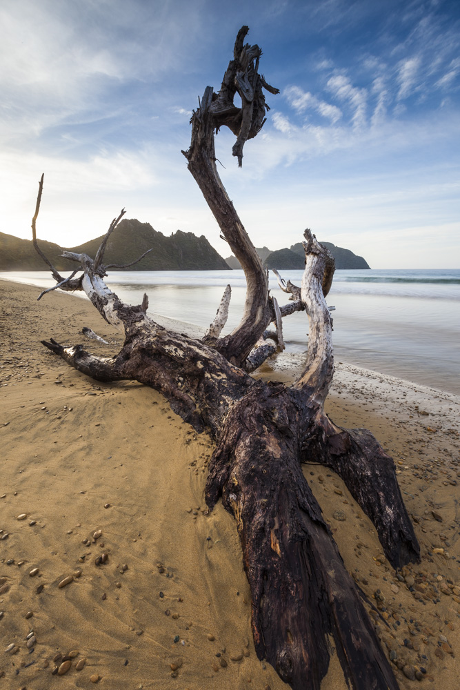 Driftwood, East Ruggedy.
