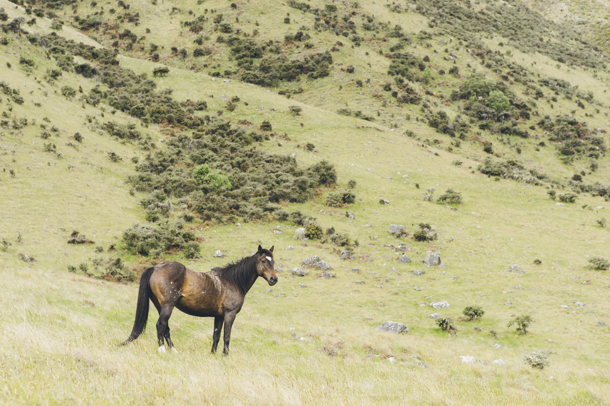 We saw several wild horses.