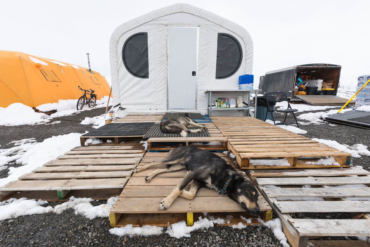 The camp is designed for Arctic comfort: insulated tents, oil-heating and designed to withstand snow and storms. Thom's Alaskan huskies are great company too, when they're not catching z's.