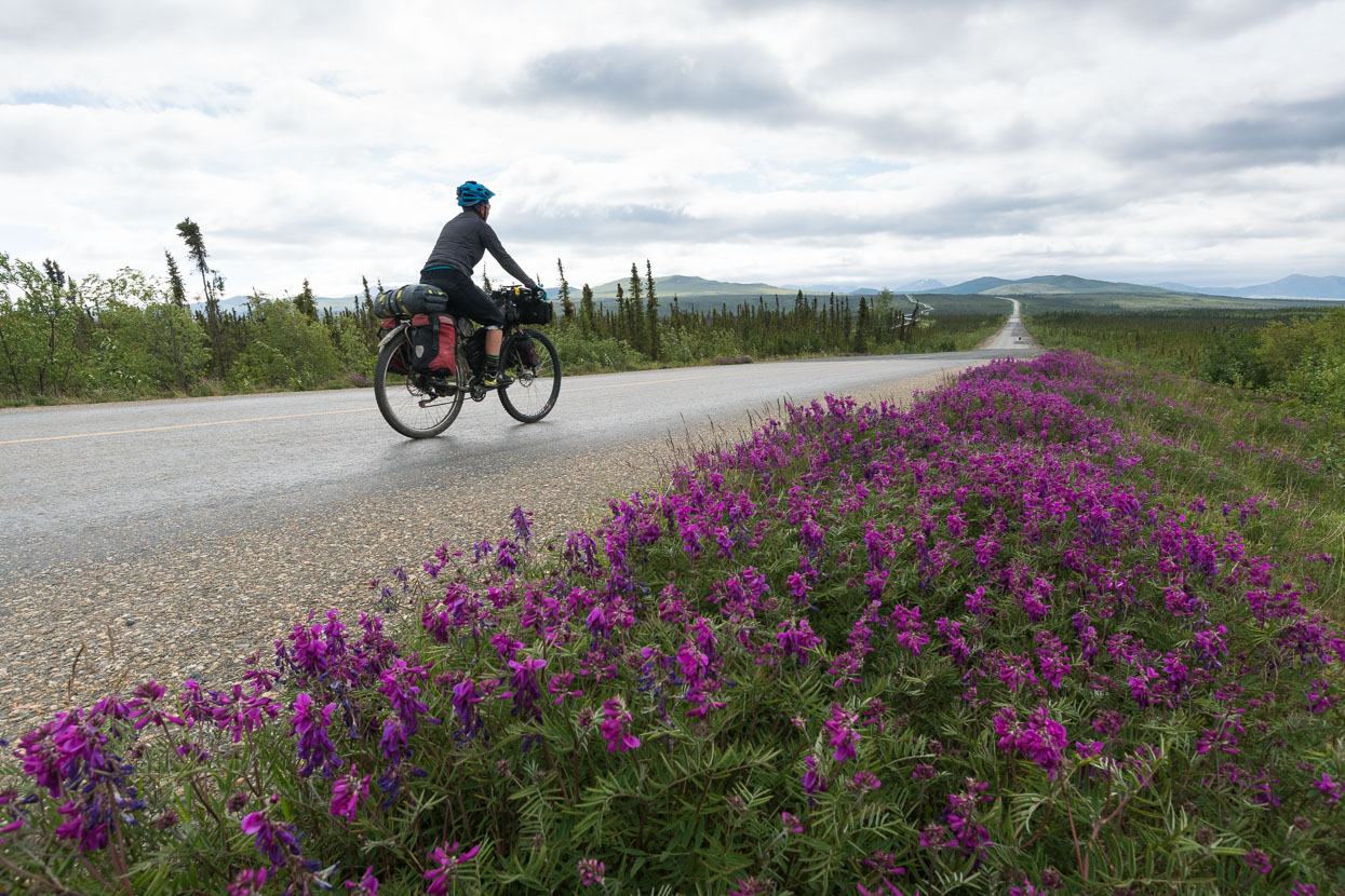 We took a couple of shorter 60-70km days out of Coldfoot to take it easier on my achilles, lupines sometimes adding colour to the now constant green either side of us.