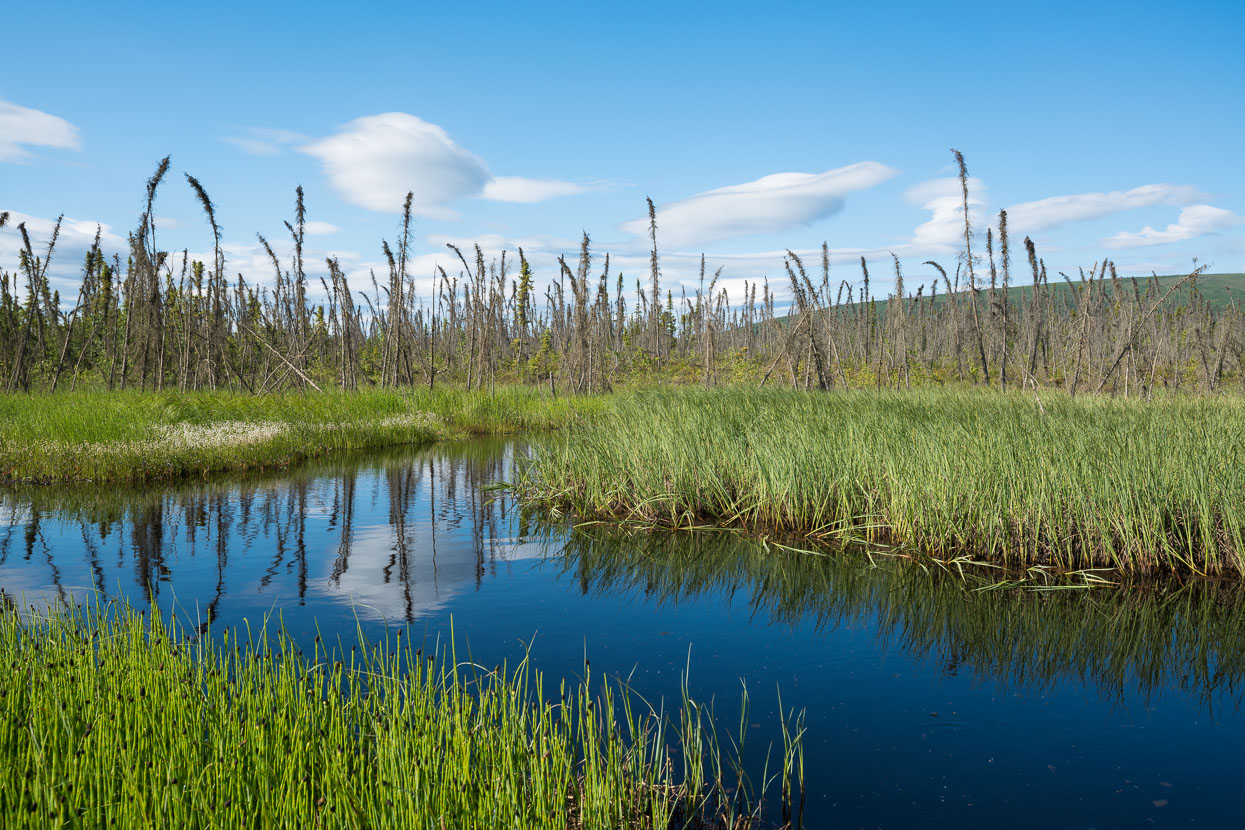 Swampy lowlands en route to the Yukon.