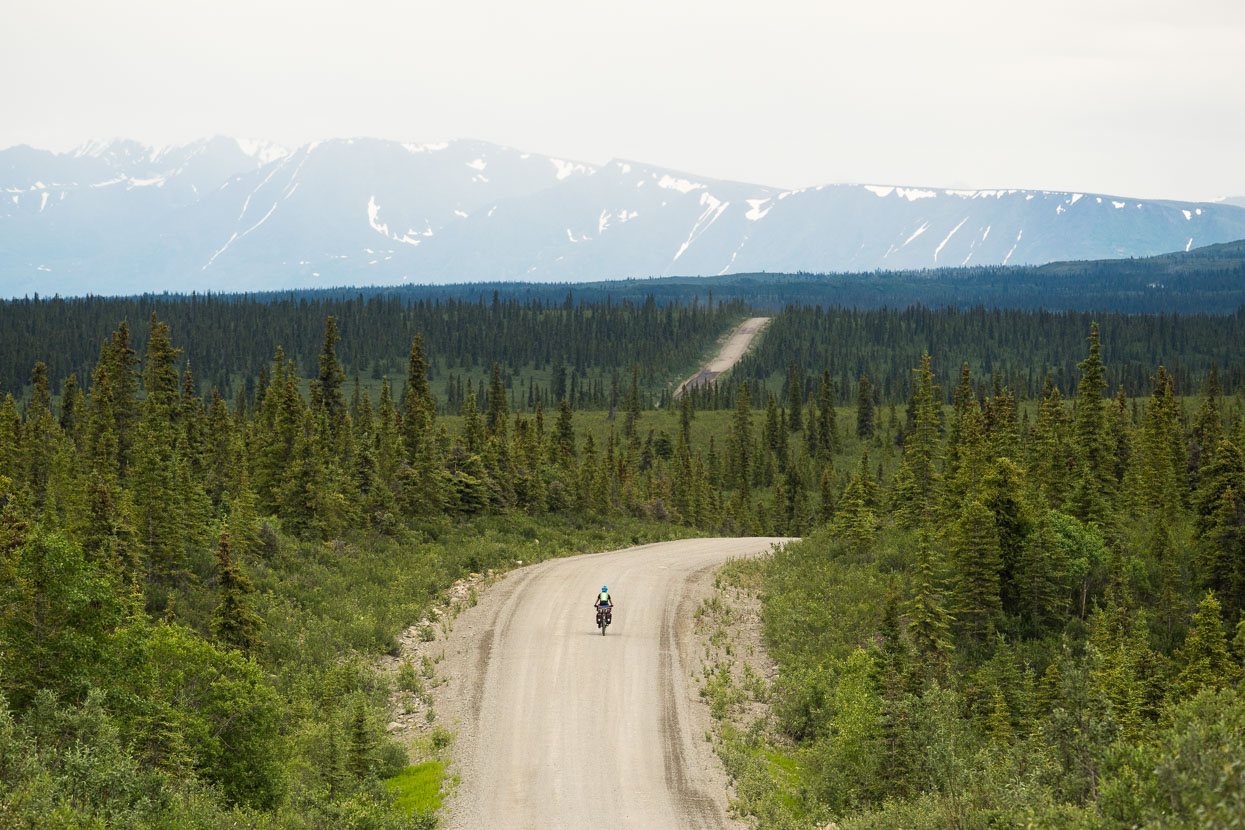 A rolling raod through the spruce trees.