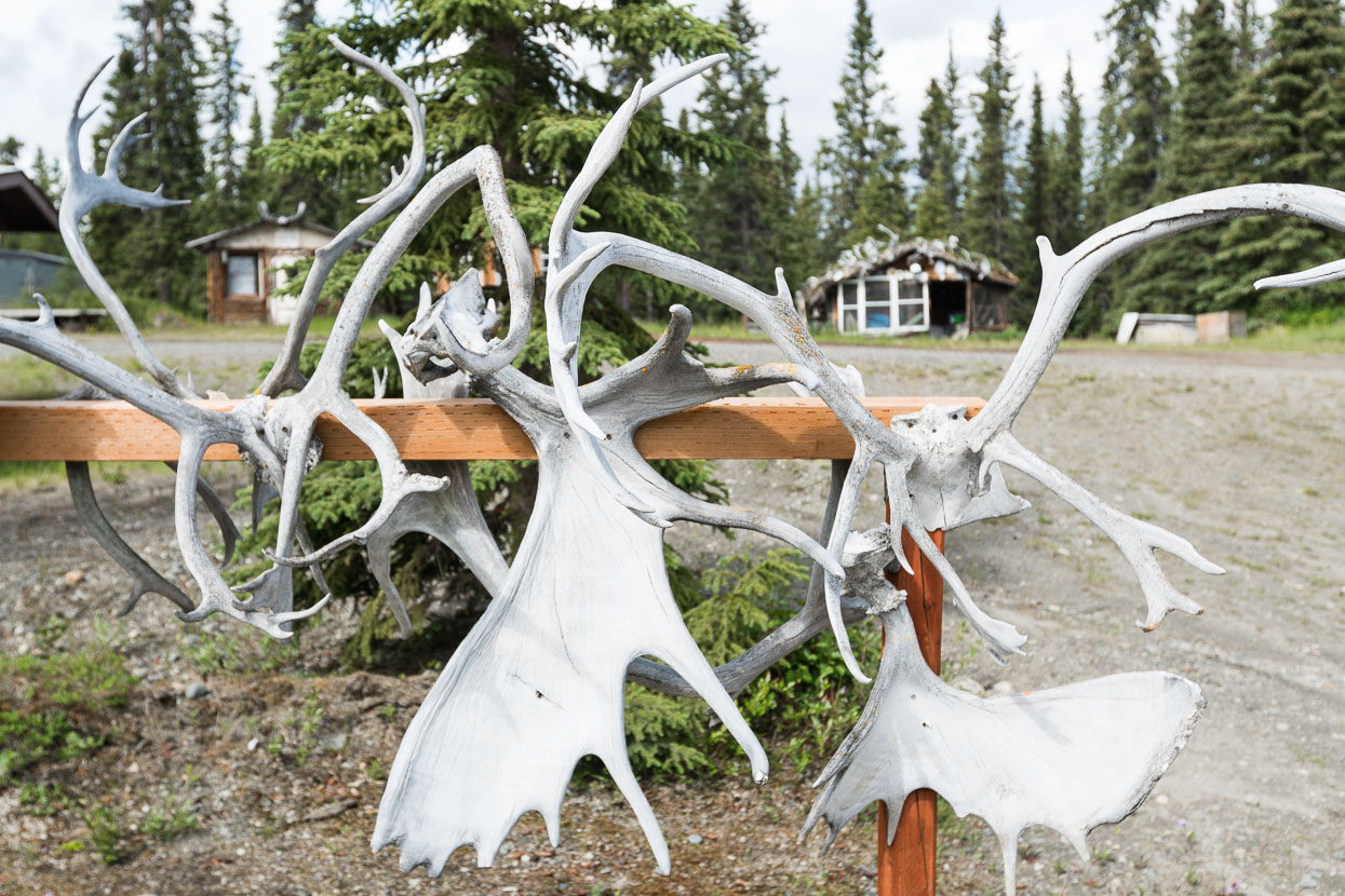 We've seen few animals from the road so far in Alaska. Disappointingly few. Antlers, skins, furs and examples of the local taxidermist's skill are abundant though - making us wonder if there are actually any animals left alive within 20 miles of the road.