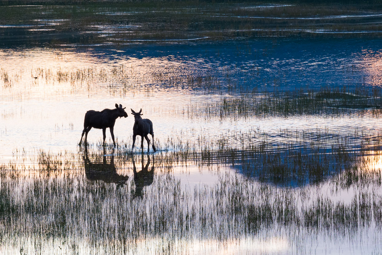 Until startled – at which point they galloped back across the lake to the cover of the scrub.