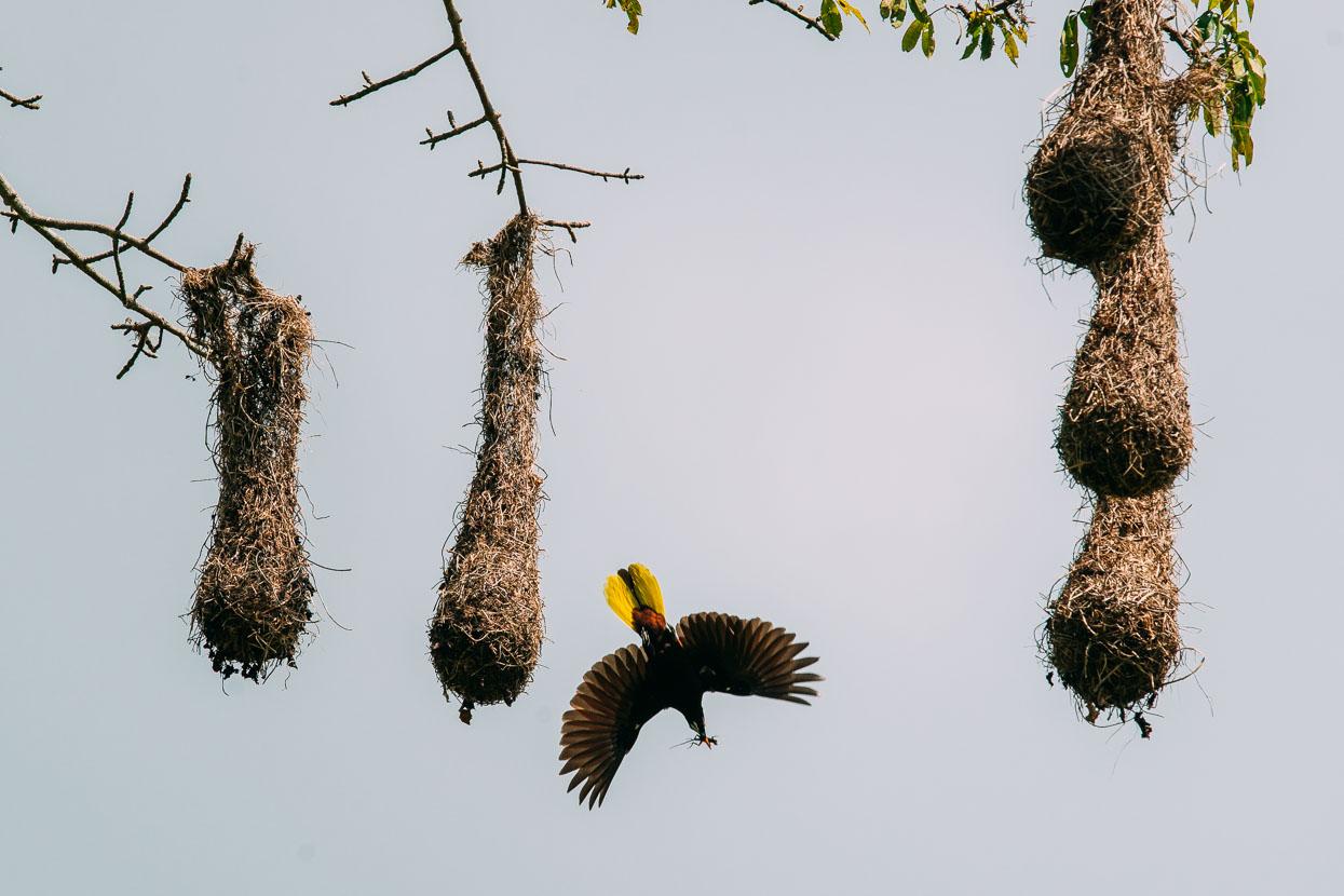 Mexico: Palomares – San Cristobal, Highlux Photography