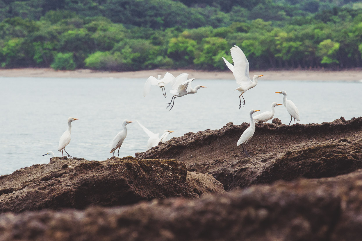 Costa Rica: Golfo de Santa Elena & Rincon de la Vieja, Highlux Photography