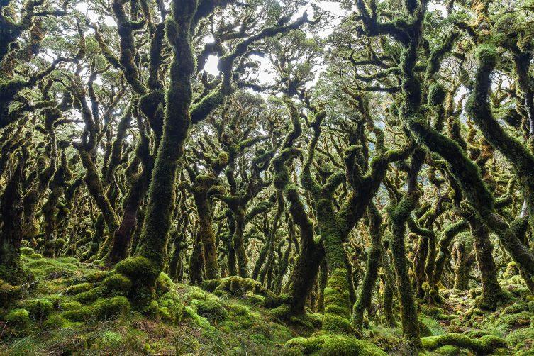Tararua Forest