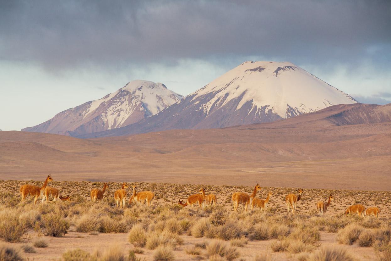 Chile: Putre – Pisiga Bolívar via the Ruta de las Vicuñas, Highlux Photography