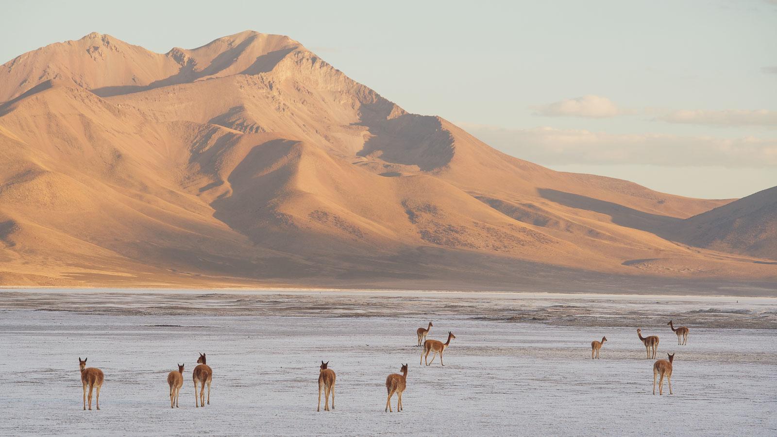 Chile: Putre – Pisiga Bolívar via the Ruta de las Vicuñas