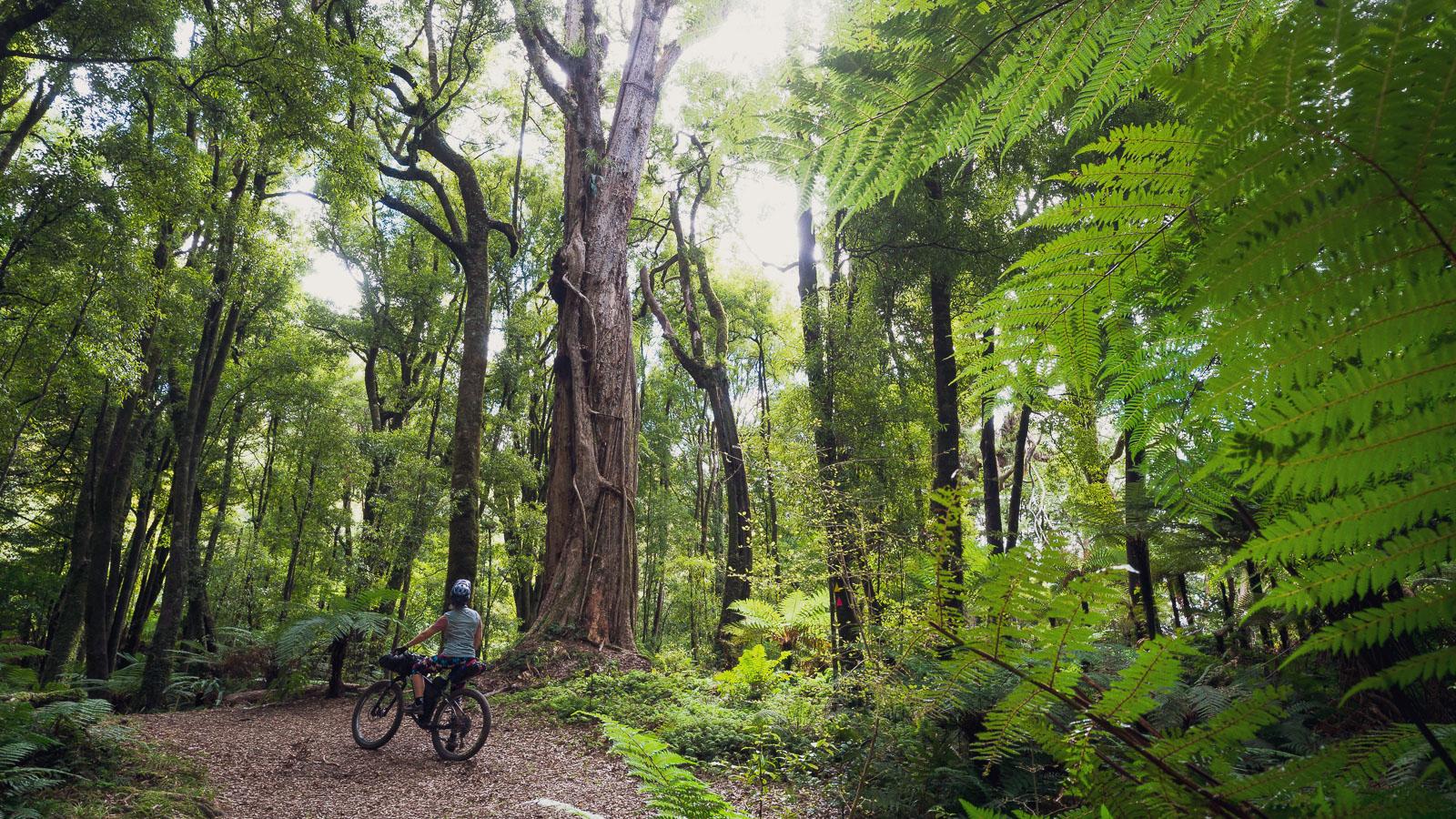 New Zealand: Bikepacking the Motu/Pakihi & Moerangi Tracks