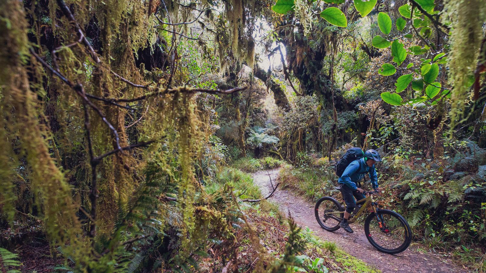 Back on the Road in New Zealand: Bikepacking Tauranga to Wellington