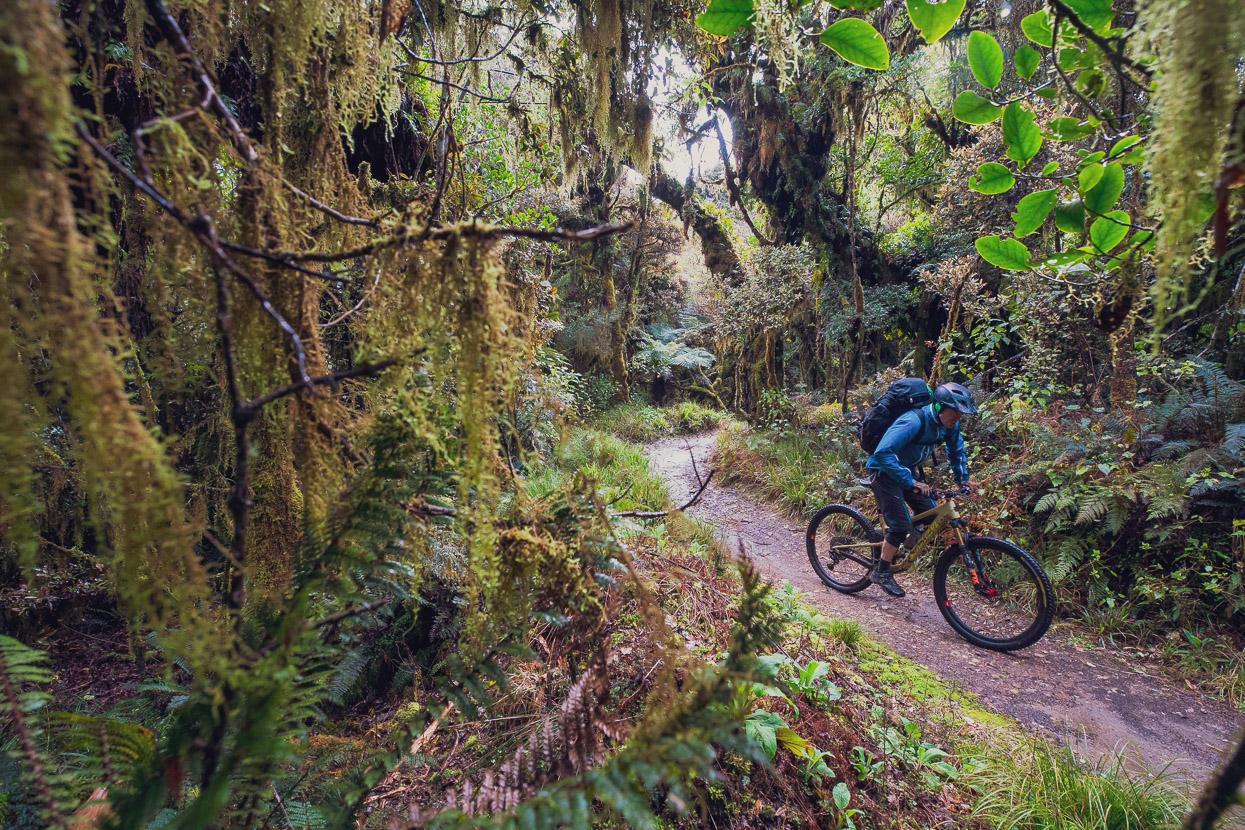 new zealand north island bikepacking